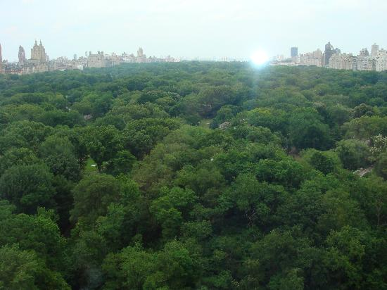 The Ritz-Carlton New York, Central Park : 22nd floor park view