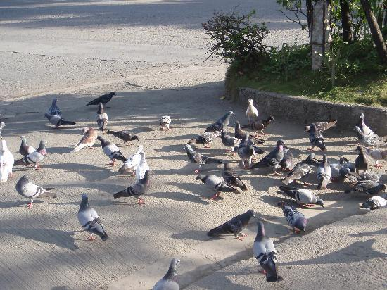 Zamboanga, Filipinas: doves at Fort Pilar