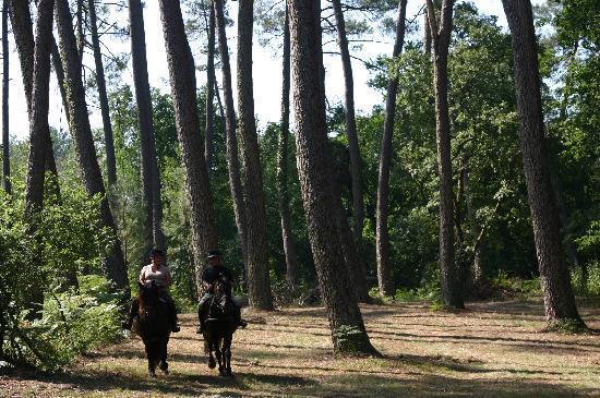 Landes, Frankrig: Rando  cheval