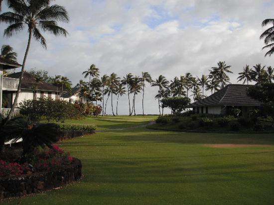 Outrigger Kiahuna Plantation: Beautiful palms overlooking the beach.