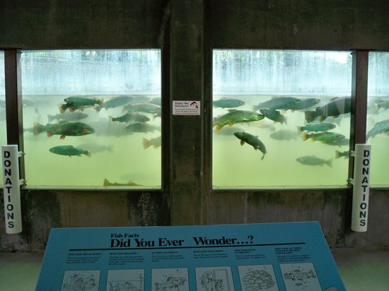 D C Booth Historic National Fish Hatchery Spearfish Sd