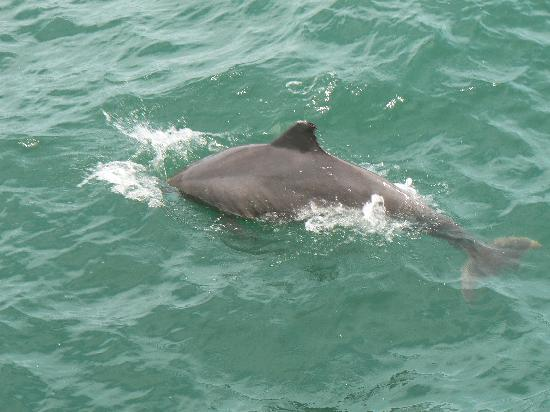Boat Ride To See Dolphins Picture Of Coral Beach Resort Amp Suites Myrtle Beach Tripadvisor