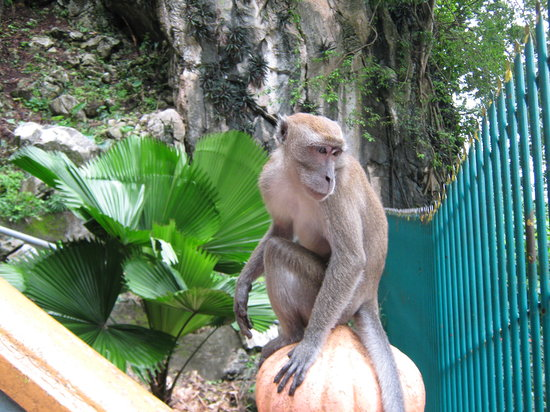 Sarang Galloway Bed & Breakfast: Batu Cave Monkey