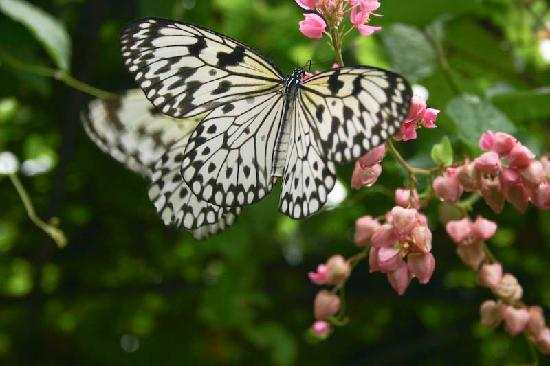 Phuket Butterfly Farm and Insectarium: An interesting day out