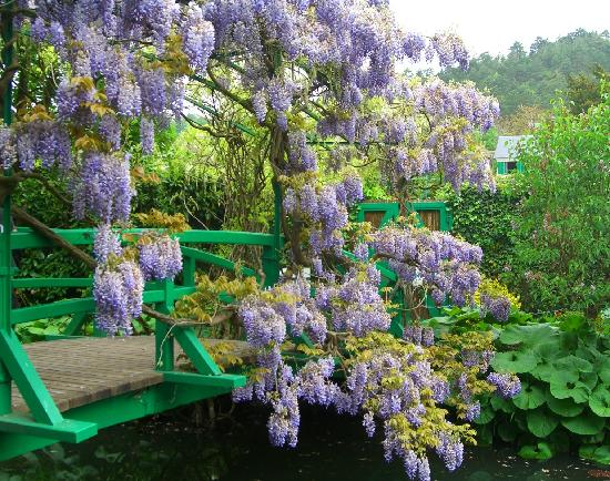 Giverny, France: Wisteria