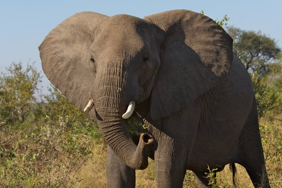 ‪‪Malelane‬, جنوب أفريقيا: Elephants from Lodge‬