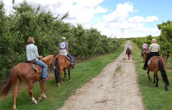 Cherry Wood Bed Breakfast and Barn: Out on the ride