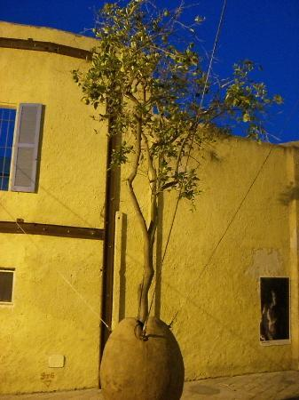 Hanging tree in Jaffa