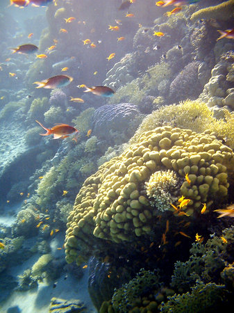 Dive Urge : Beautiful corals with lots of fish