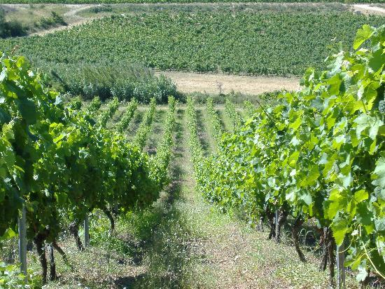 Photos de Domaine O'Vineyards, Villemoustaussou
