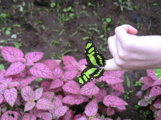 Mindo, : Butterfly center