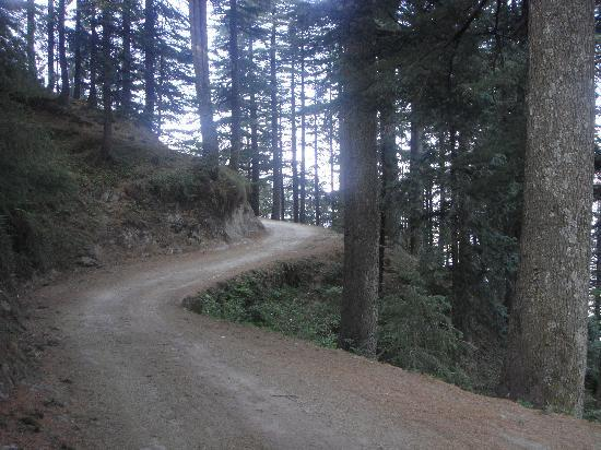 Dalhousie, Индия: The Road to Kalatop Forest Rest House