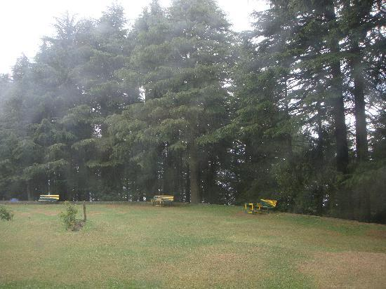 Dalhousie, India: The lawn in Kalato Forest Guest house
