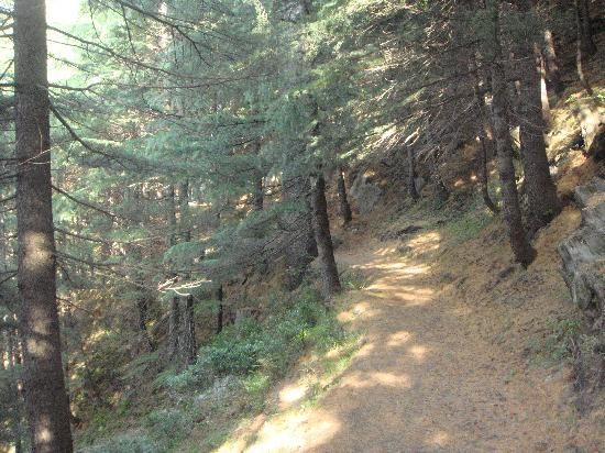 Dalhousie, India: Trekking route-kalatop