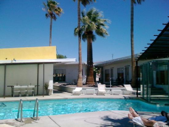 Miracle Manor: The amazing pool and the palm tree rock garden.