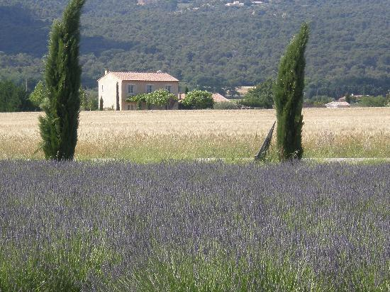 lavender field,Provence