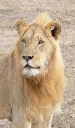 Djuma Bush Lodge : Windmill blonde male - handsome