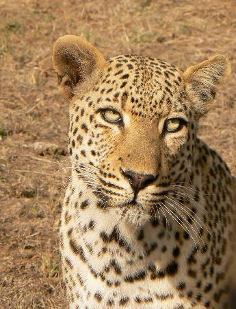 Djuma Bush Lodge : Mvula