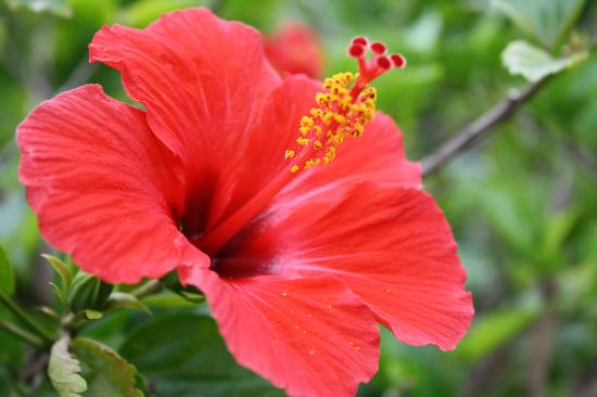 Belize Tradewinds Paradise Villas: One of many flowers