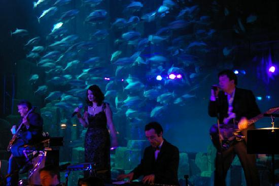 Aquarium de Paris - CineAqua: concert Cineaqua Paris - decembre 2009 ...