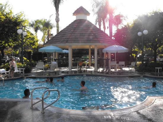 Pool area picture of candy cane inn anaheim tripadvisor for Candy hotel