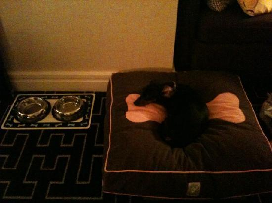 Hotel Palomar Dallas - a Kimpton Hotel: Bella in her comfy dog bed at Hotel Palomar Dallas