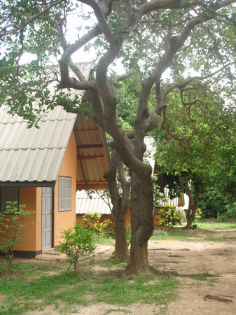 Cashewnut Tree Bungalows