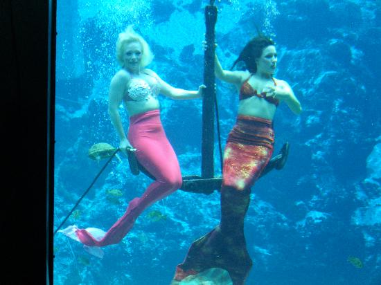 Mermaids in Florida Weeki Wachee Mermaids at Weeki Wachee