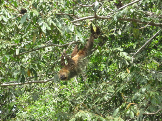 Province of San Jose, Costa Rica: A Sloth