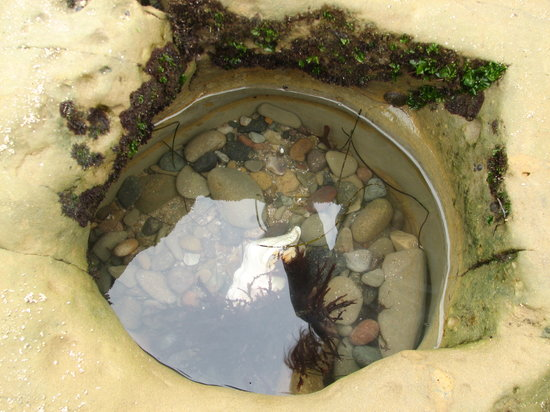 Tide Pools in the San Francisco Bay Area