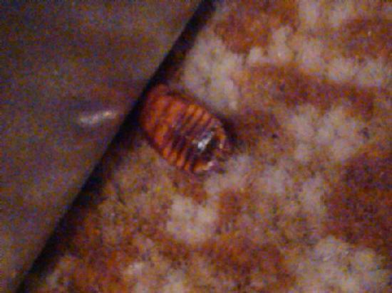 Holiday Inn Express Sierra Vista: One view of the bug found
