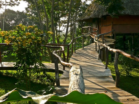 Cotton Tree Lodge: An elevated boardwalk connects all cabanas