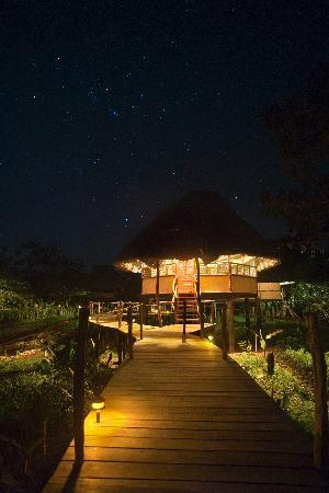 Cotton Tree Lodge: Standard Cabana exterior at night