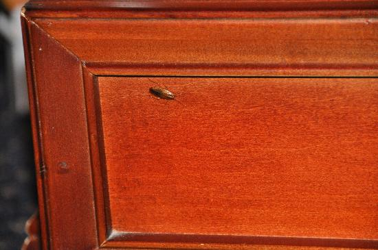 La Quinta Inn Kennesaw: A roach on the dresser
