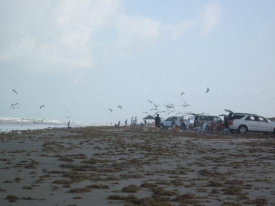 Beautiful bird watching for Padre island national seashore fishing report