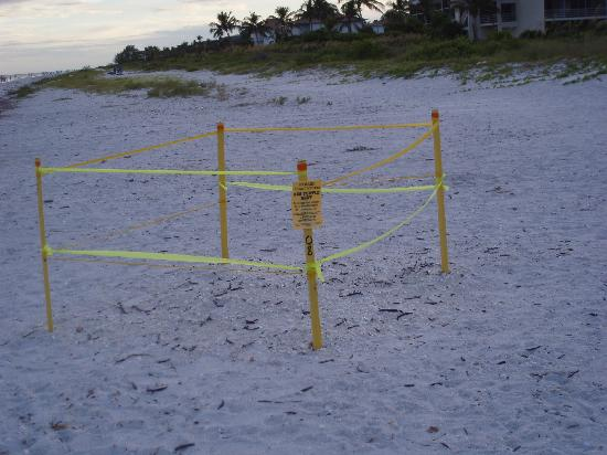 Loggerhead Cay: Sea Turtle Nest