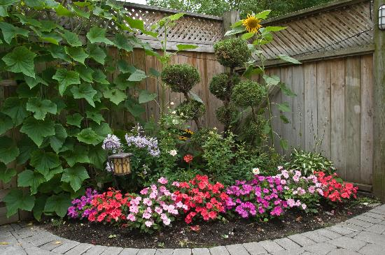 Backyard Flowers : Backyard garden  Picture of 213 Carlton Toronto Townhouse, Toronto