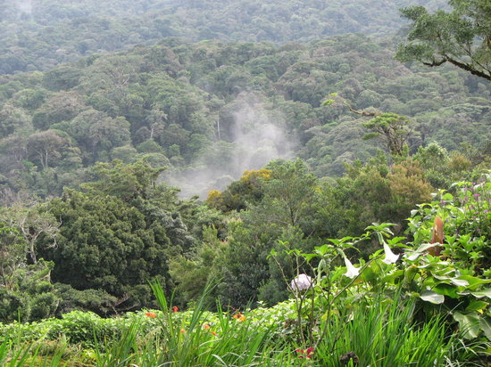 Monteverde, Costa Rica: View from my room