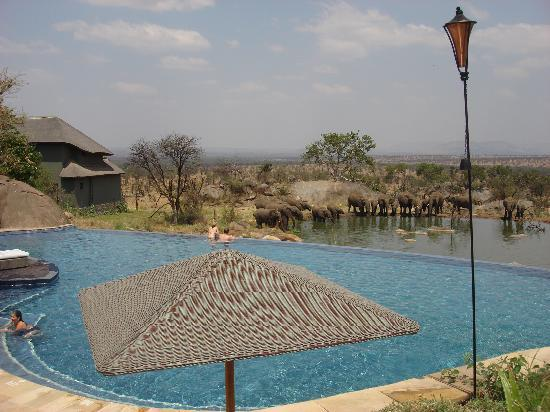 Bilila Lodge: Elephants at water hole