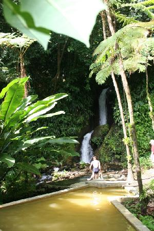 Photos of Papillote Tropical Gardens, Roseau