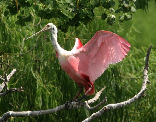 Beaumont, TX: The Big Thicket National Preserve and the Neches River are two locations to spot birds and wildl