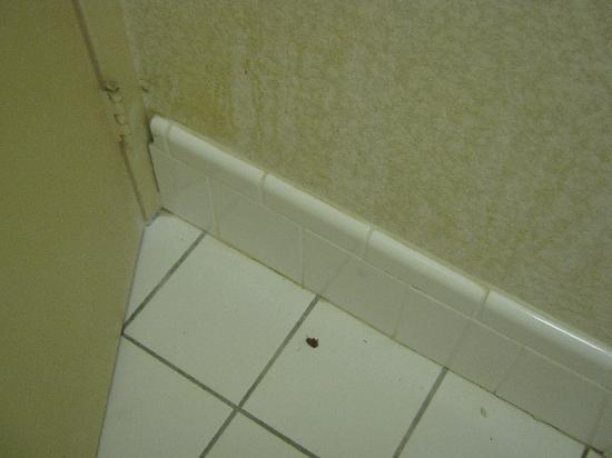 Howard Johnson Clinton: Cockroach behind bathroom door