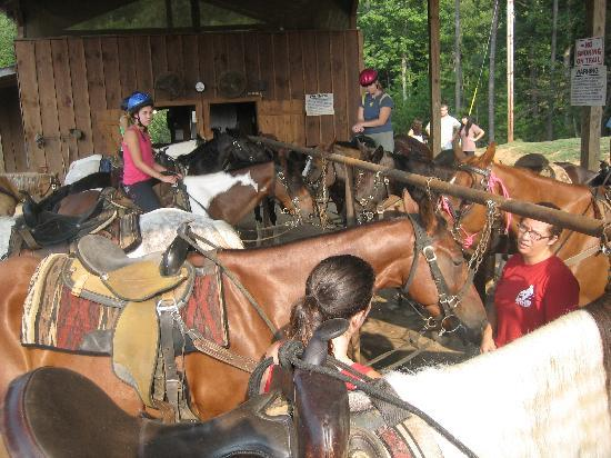 Copperhill, TN: All the horses lined up waiting for their riders