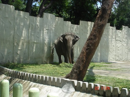 Manila Zoo Philippines Address Phone Number
