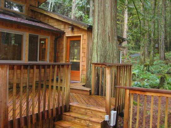 Deep Forest Cabins at Mt. Rainier: Hottub's right behind me