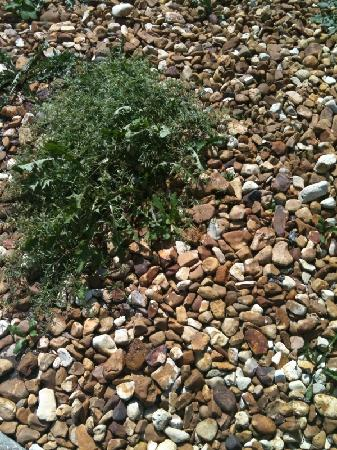 Baymont Inn and Suites Crossville: Weeds