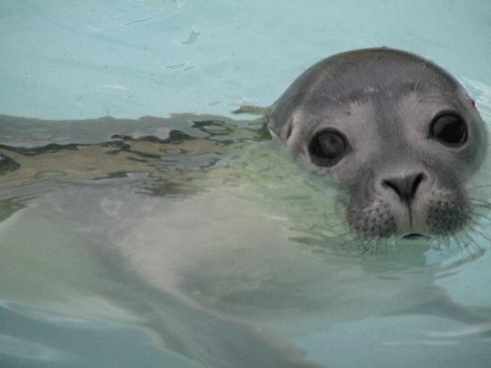Baby Seal - Picture of Natureland Seal Sanctuary, Skegness ...