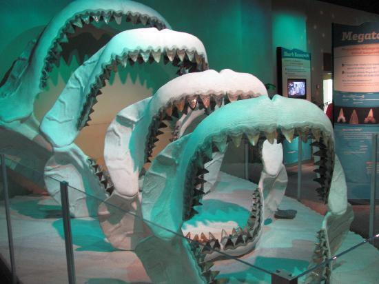 Jackson Ms Museum Of Natural Science