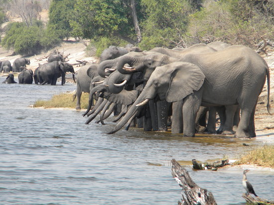 Maun, Botswana: Lunch View on the Chobe River