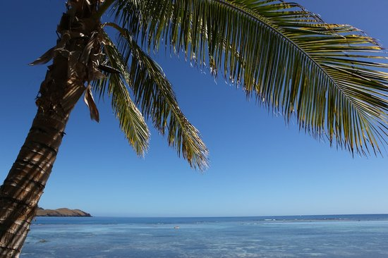 Tokoriki Island, Fiji: Palm Tree outside our burr